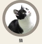 診療動物 猫