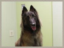 犬の各種ワクチン接種