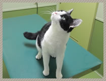 猫の各種ワクチン接種
