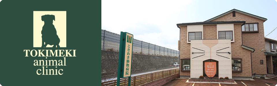 新潟市西区ときめき動物病院