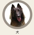 診療動物 犬