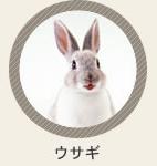 診療動物 ウサギ