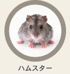診療動物 ハムスター