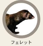 診療動物 フェレット